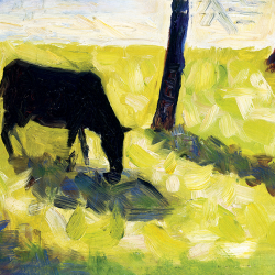 Black cow in a meadow