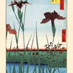The flowers of Iris
