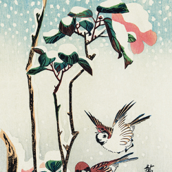 Sparrows and camellias in the snow