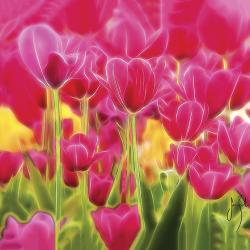 Exotic tulips