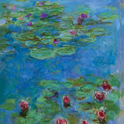 Moment water lilies