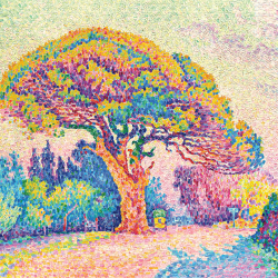 Un pino a Saint Tropez