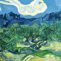 Olive trees in a mountain landscape