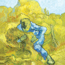 Man tying the sheaves