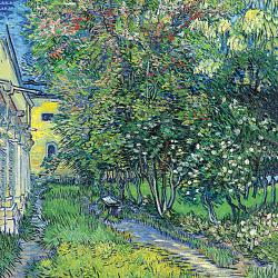 The garden of the asylum in Saint Rémy