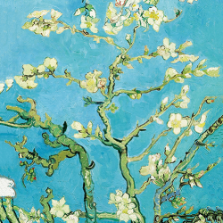 Almond blossoms vertically