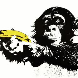 Yellow gun monkey
